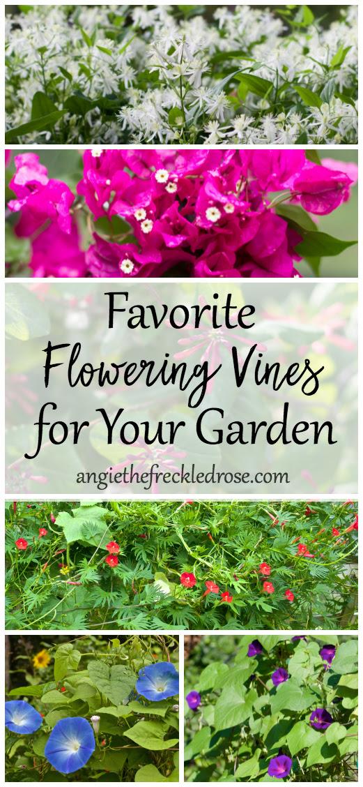 Favorite Flowering Vines | angiethefreckledrose