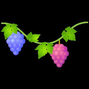 ブドウのイラスト7 花植物イラスト Flode Illustration フロデ