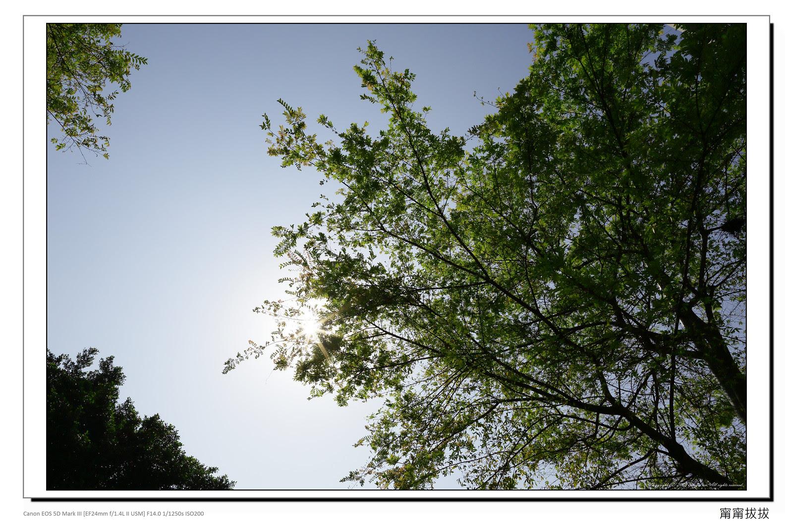 frame_BING7295