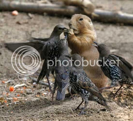 crows pics