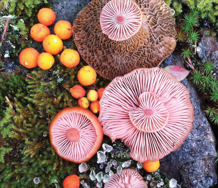 Nature Medleys Mushrooms Nature Photography Jill Bliss