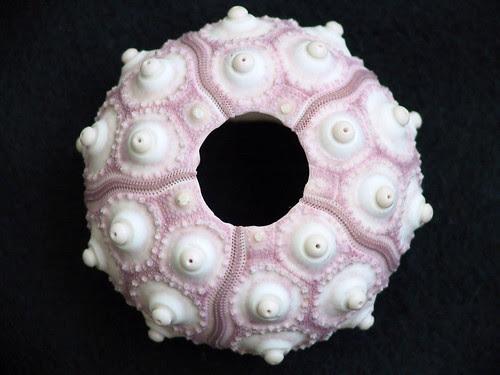 shell 6
