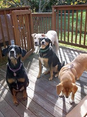 Outtakes_4Dogs_101611i