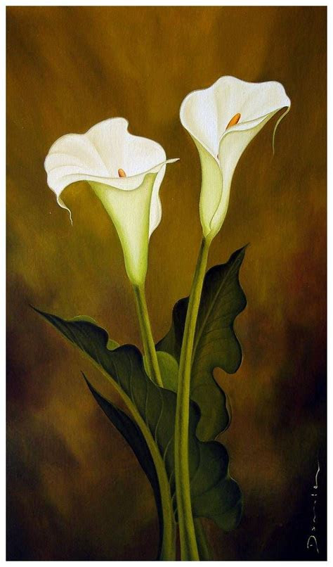 cala kala images  pinterest flower art