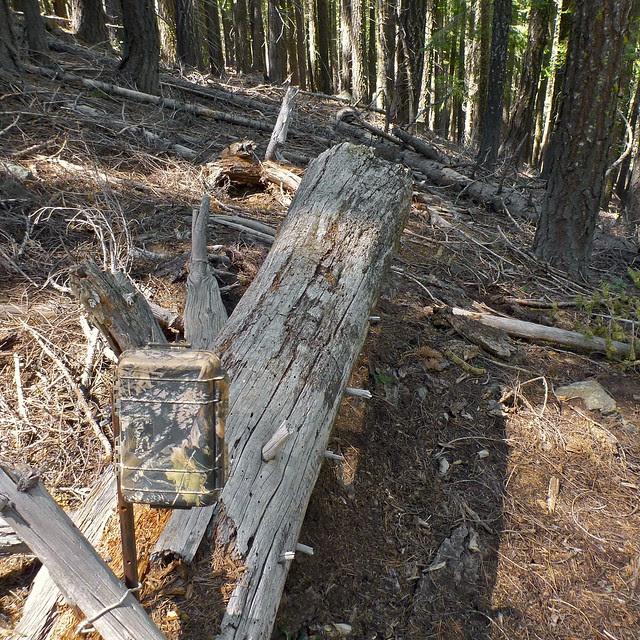 log set in fir forest