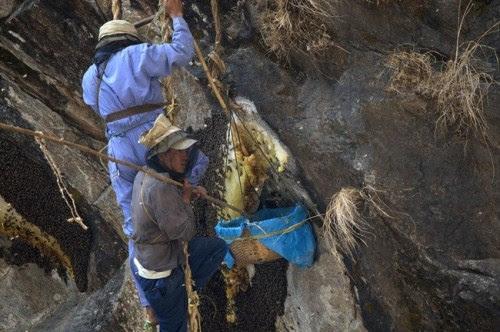 Perierga.gr - Συγκομιδή μελιού στα Ιμαλάια