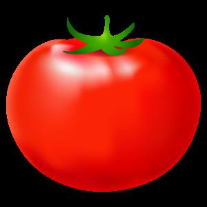 トマトのイラスト5 花植物イラスト Flode Illustration フロデ