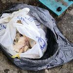 Brazey-en-Plaine | Brazey-en-Plaine : un chat retrouvé mort dans un sac-poubelle