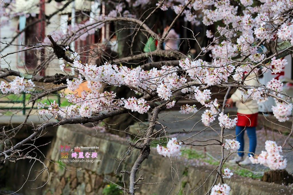2013-04-04-15h48m09IMG_1900
