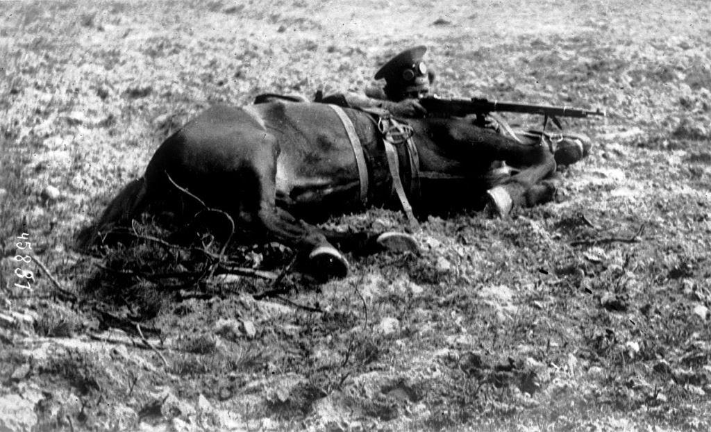 Os animais também lutaram na Primeira Guerra Mundial 38