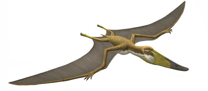 Istiodactylus 700.309