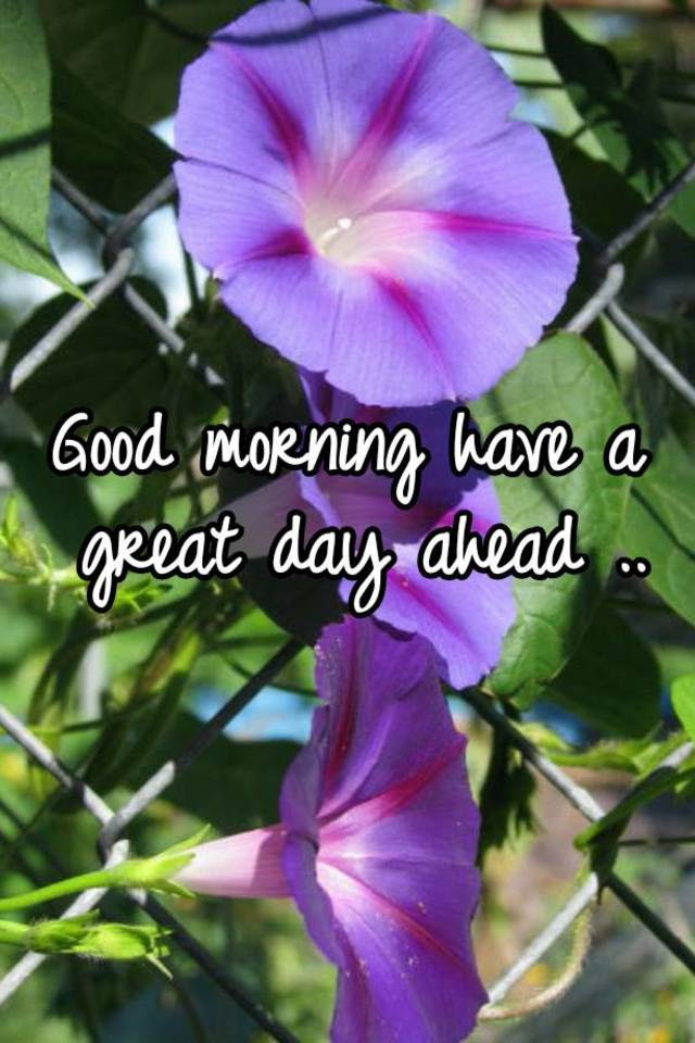 Good Morning Have A Great Day Ahead