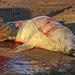 Seal birth 10 (2:21pm) by nutmeg66
