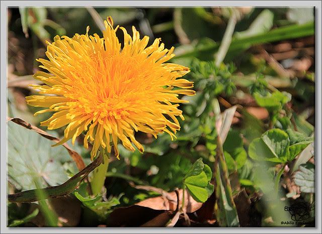 8 Flores