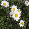 daisy test K02 f/16