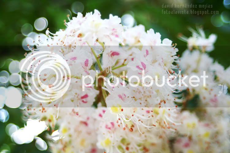 Un primer plano de un racimo de flores blancas en el Parque de El Retiro de Madrid, homenaje a todas las madres
