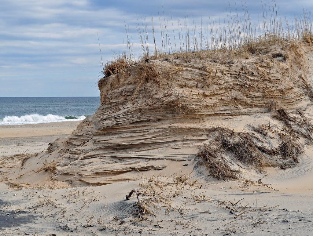 Back Bay Beach Dune