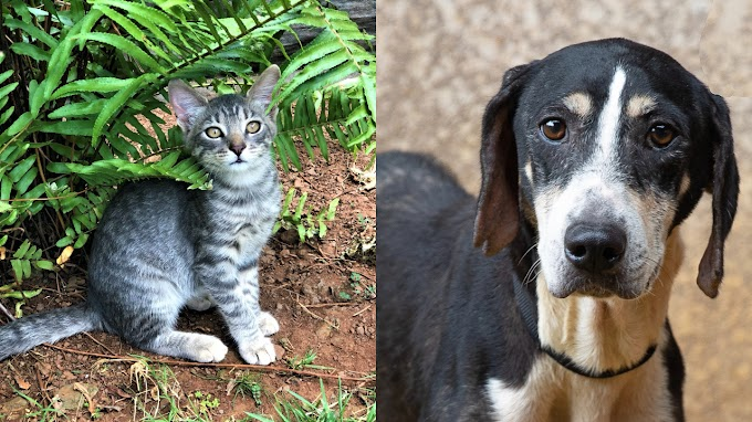 TREND ESSENCE: Animal rescue group flies hundreds of pets from Hawaii to northwest US