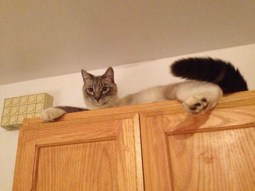 on top of cabinet.jpg
