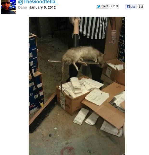 Imagem do rato gigante foi publicado por um usuário do Twitter. (Foto: Reprodução)