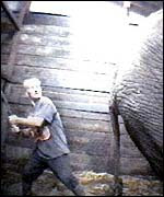 An elephant being beaten
