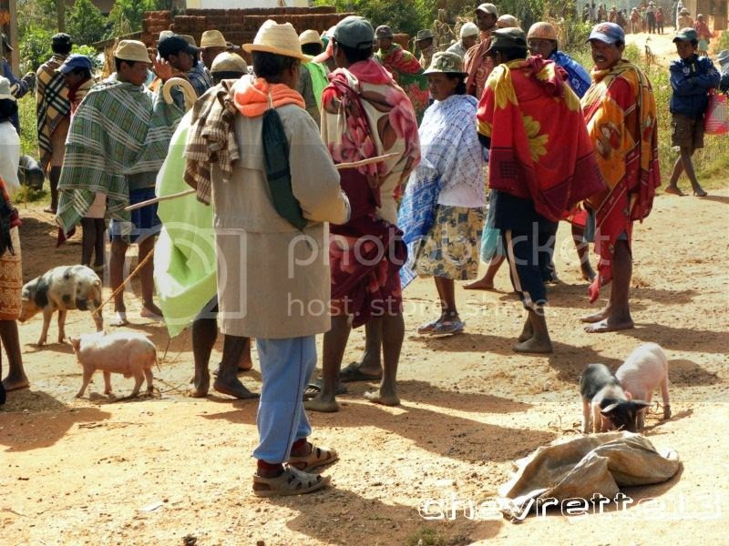 http://i1252.photobucket.com/albums/hh578/chevrette13/Madagascar/DSCN1591800x600_zps17c38680.jpg