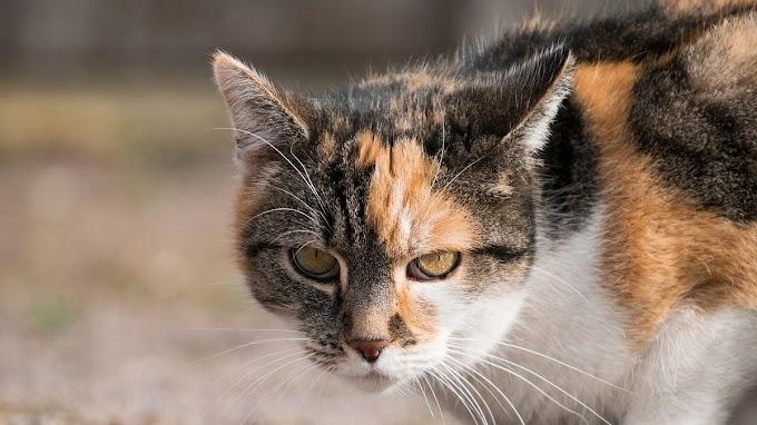 Estos son los 5 tipos de personalidad de los gatos