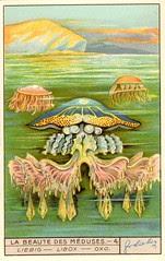meduse 6