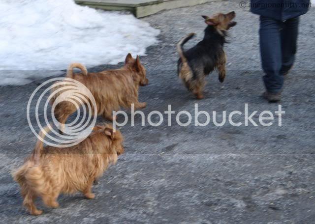 X-files: Tessa, Ruska, Lilja photo 101_5178.jpg