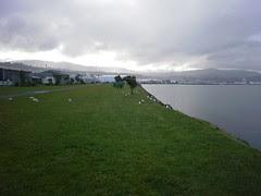 Day 3: Dunedin ke Te Anau