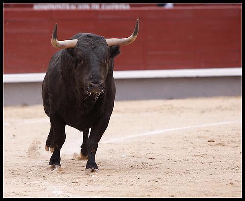 Toro de José Vázquez