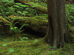 Tree and Fern in Moss