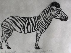 Burchell's variety of Zebra