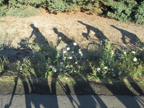 Shadows and Queen Anne's Lace