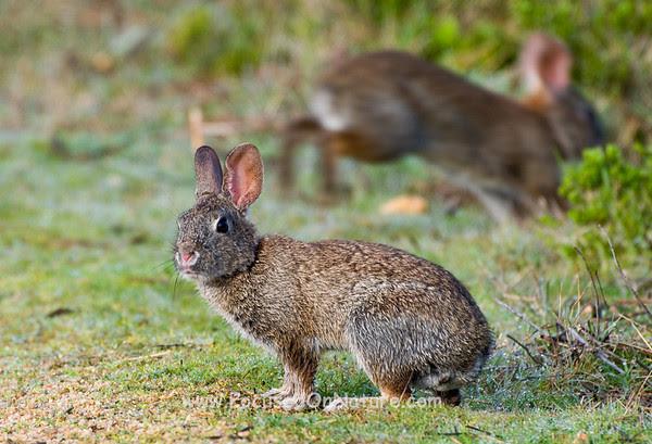 Brush Rabbit and Shy Friend