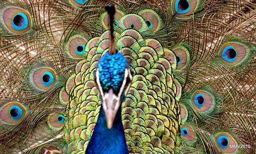 más fotos del pavo
