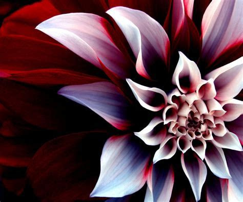 Cool 3D Flower Android Wallpapers #18332 Wallpaper   Cool