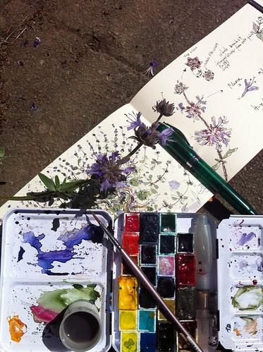 Drawing purple bush