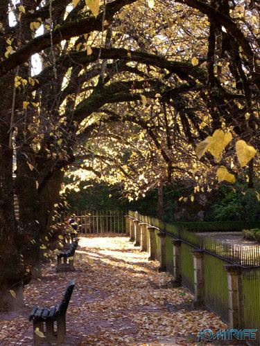 Jardim Botânico da Universidade de Coimbra (2) Ramos curvos [en] Botanical Garden of the University of Coimbra - Curved treas
