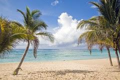 Beach Palm Trees Riviera Maya