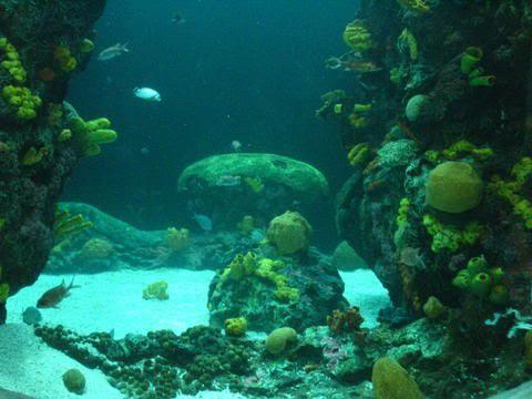 Undersea Scene