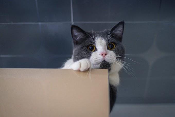 Celo en gatas: descubre todo lo necesario y cómo afrontarlo