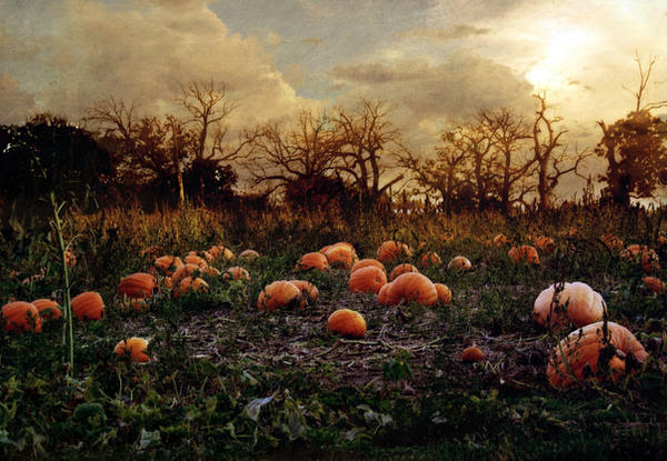 Image result for pumpkin patch