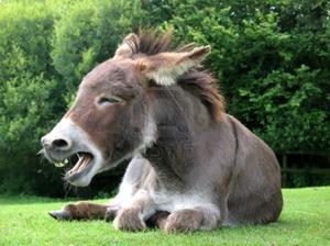 Donkey Image