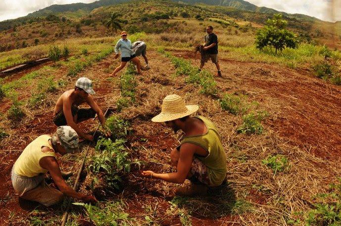 Risultati immagini per l'agricoltura bioregionale