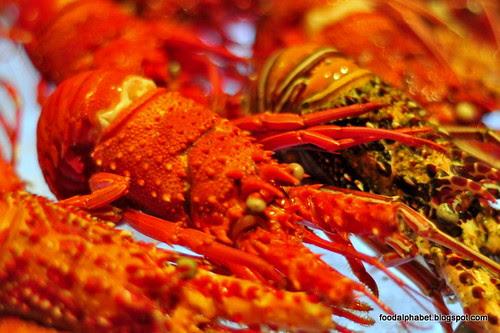 lobster16