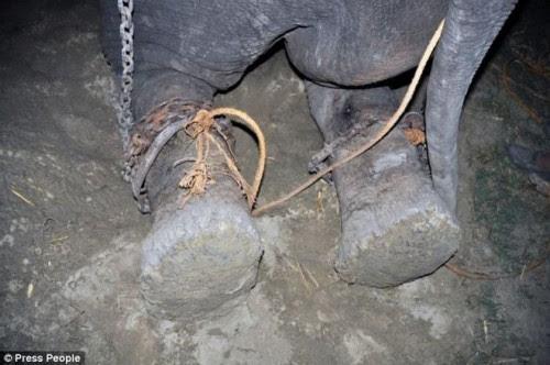 παγκόσμια-συγκίνηση-για-τα-δάκρυα-του-ελέφαντα-που-απελευθερώθηκε-μετά-από-μισό-αιώνα