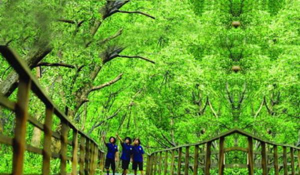 Jakarta-Punya-Hutan-Mangrove_kidnesiathumb630x368