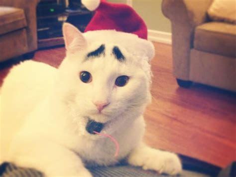 sam kucing  memiliki alis menjadi sensasi