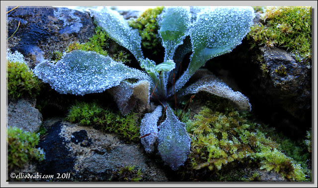 4 planta helada